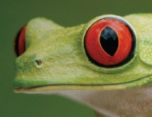 The San Jose Reptile Show Thumbnail